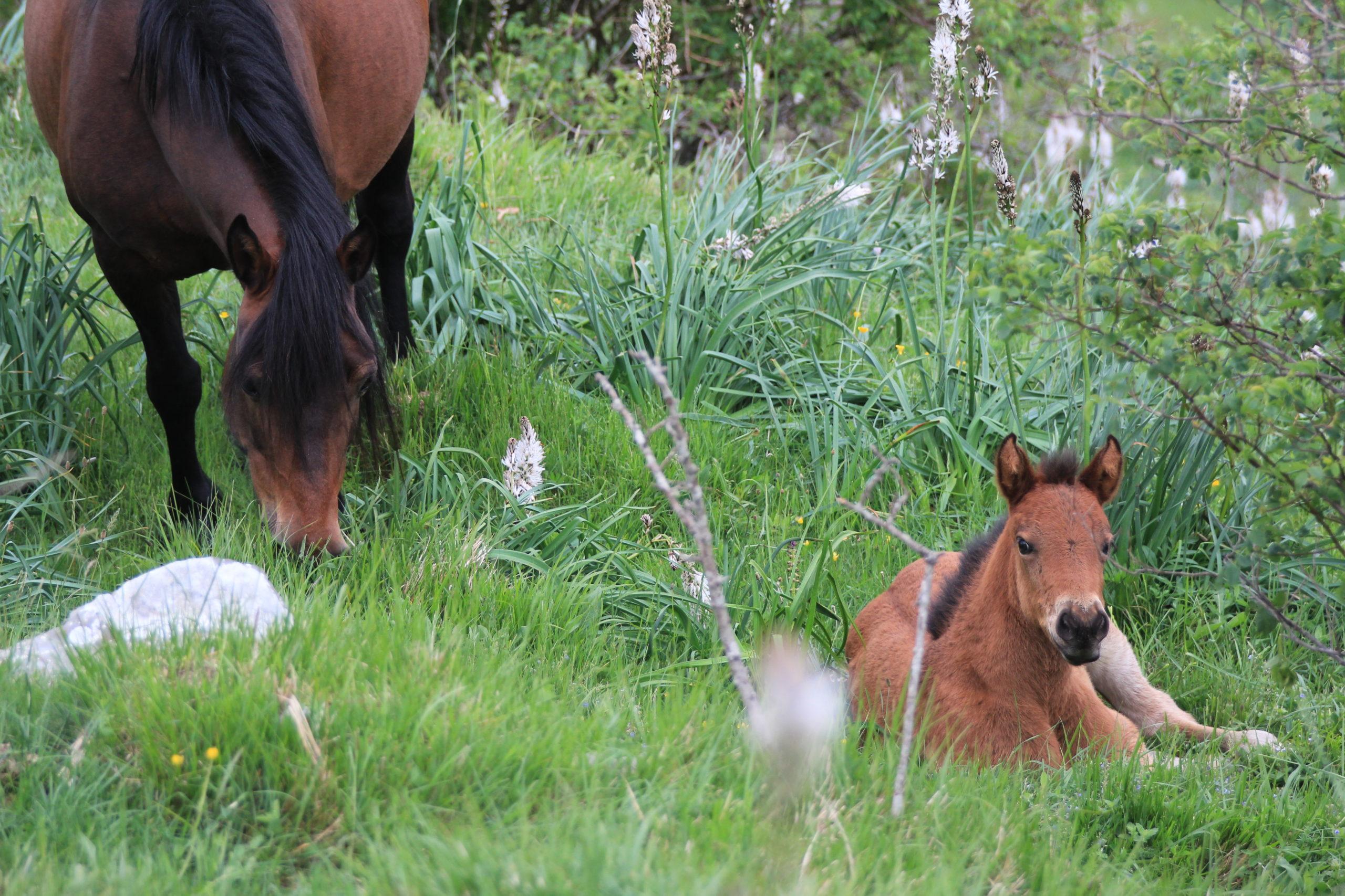Mamma cavallo e puledrino