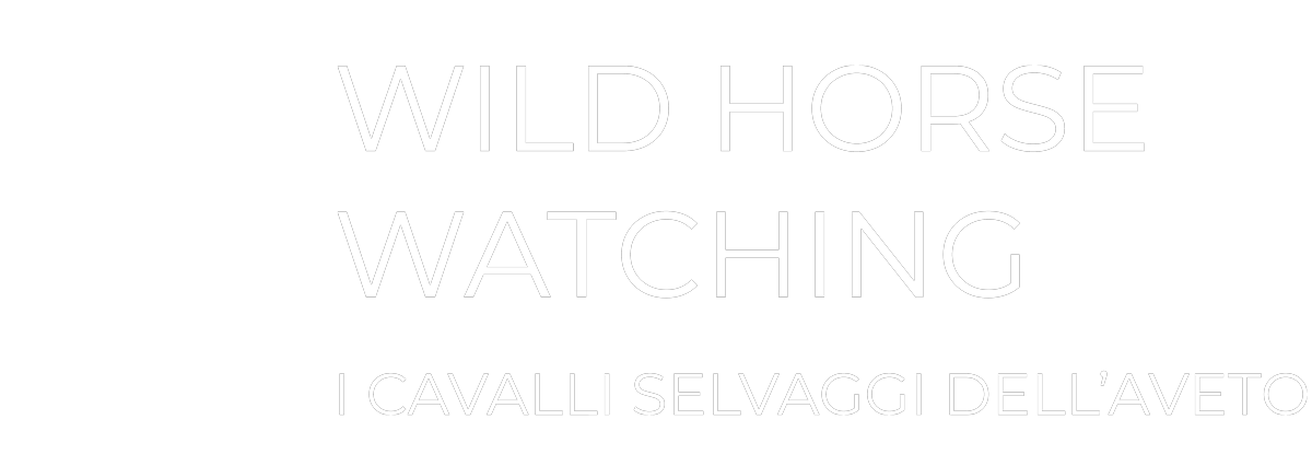 Cavalli Selvaggi D'Aveto - Horse Watching in Liguria